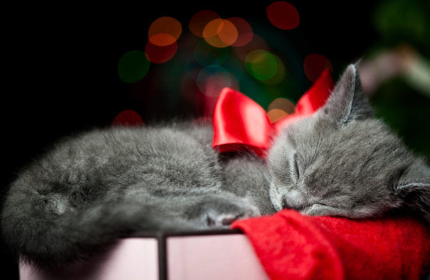 christmas kitty pictures