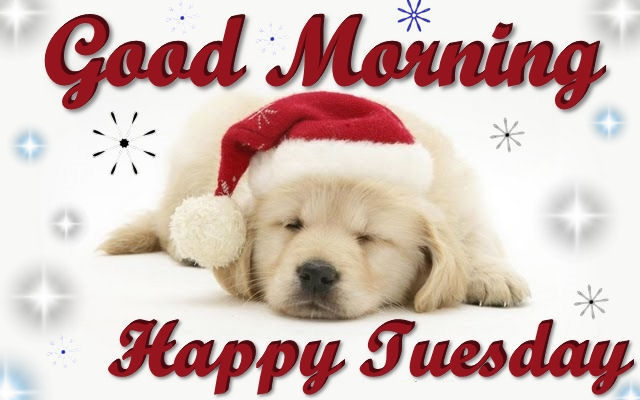 Good morning happy tuesday christmas dog quote pictures photos and