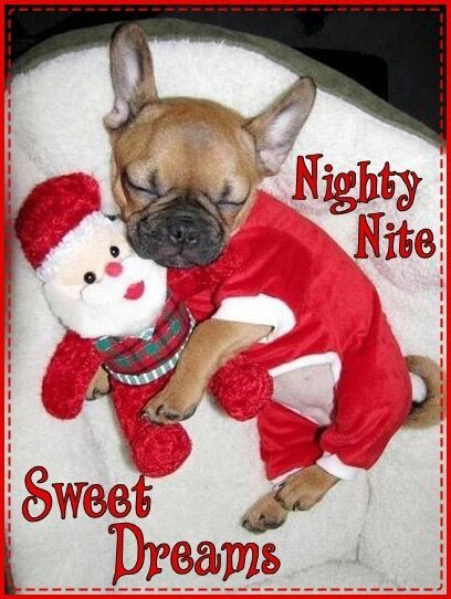 valentines day quotes for my family - Nighty Nite Sweet Dreams Christmas Time Quote