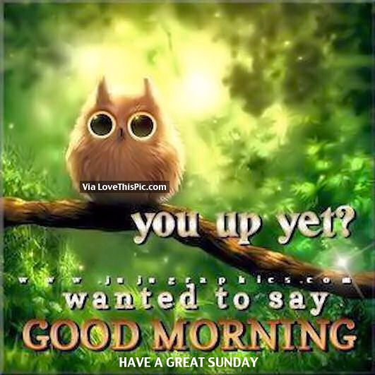 Hi Good Morning Quotes: Wanted To Say Good Morning, Have A Great Sunday Pictures