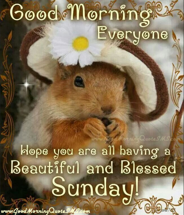 Good Morning Everyone Sunday : Good morning everyone hope you are all having a beautiful