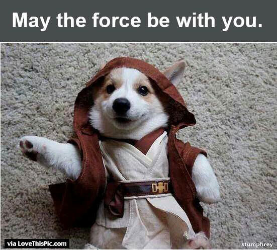 may the force be with you funny dog pictures photos and. Black Bedroom Furniture Sets. Home Design Ideas