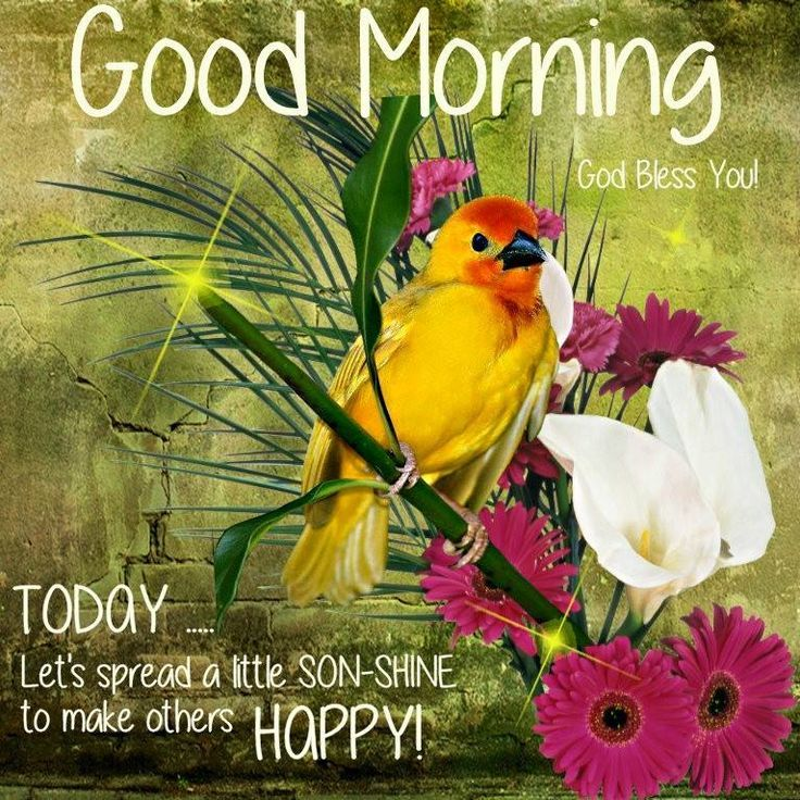 Good Morning Spread Happiness Today Pictures Photos And Images For Facebook Tumblr Pinterest And Twitter