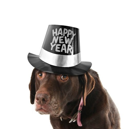 chocolate lab new year