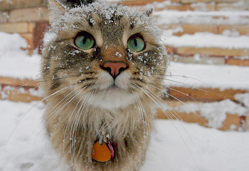 20 cats that appreciate snow | MNN - Mother Nature Network |Cat Snow Flakes