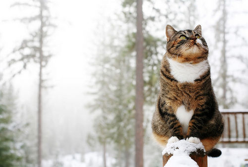 Cat On Snow Post Pictures Photos And Images For Facebook Tumblr Pinterest And Twitter