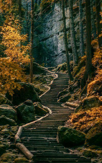 Dark Forest, Sächsische Schweiz, Germany Pictures, Photos, and Images for Facebook, Tumblr
