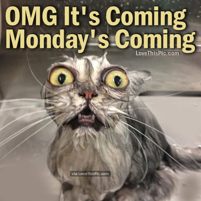 omg it s coming monday is coming pictures photos and