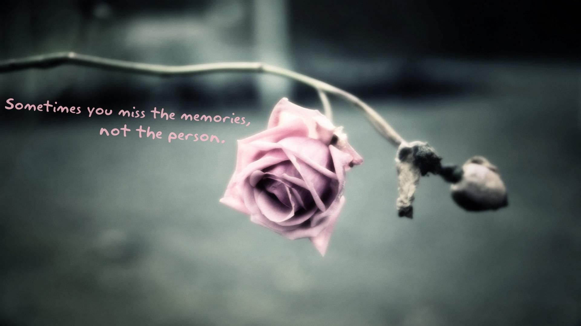 You Miss The Memories, Not The Person Pictures, Photos, and Images for Facebook, Tumblr ...
