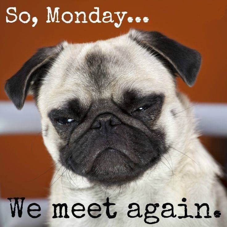 Image result for funny clean memes about monday