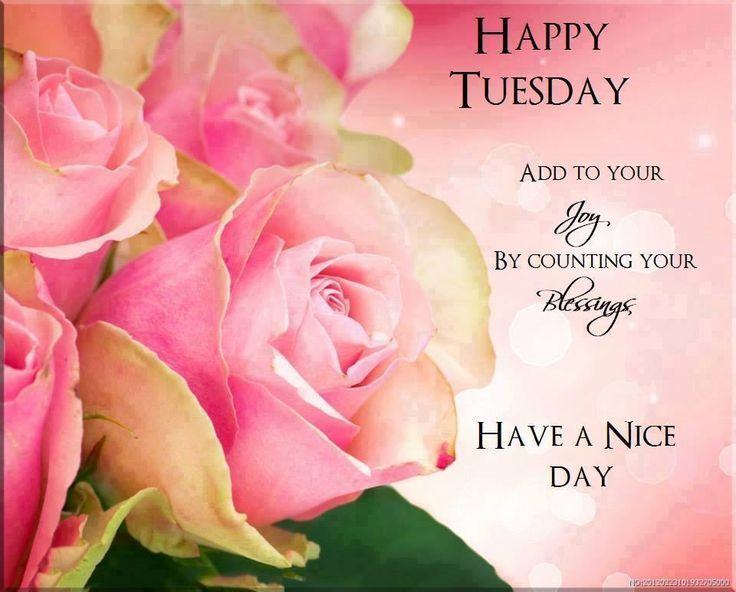 Happy Tuesday Joy And Blessings Pictures, Photos, and ...