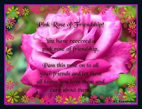 The Pink Rose Of Friendship Pictures Photos And Images
