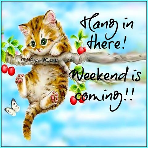 Hang in there the weekend is coming pictures photos and for New kid movies coming out this weekend
