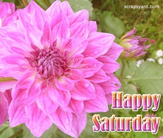 Happy Saturday Flower Pictures Photos And Images For