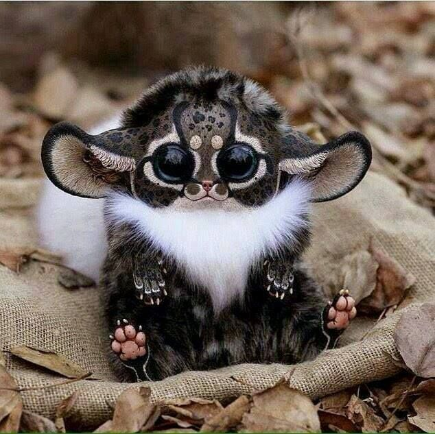 Real Life Gremlin! Southeast Africa Monkey From Madagascar