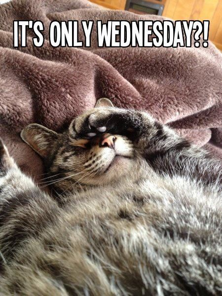 It&#39-s only wednesday | Picture Quotes