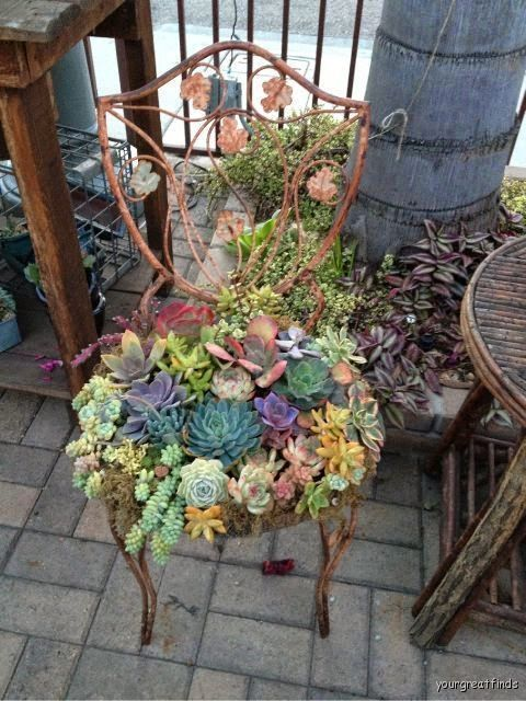 Succulent Garden Chair Pictures Photos And Images For