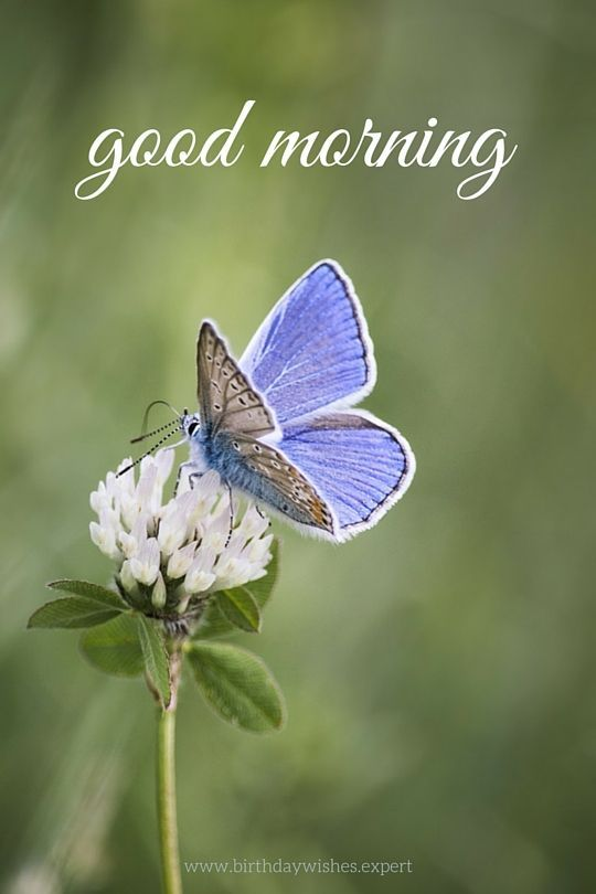 Good Morning Quote With Butterfly And Flower Pictures