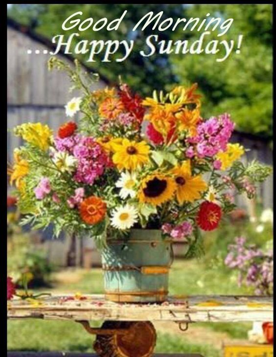Good Morning Sunday Flowers Images : Good morning happy sunday image with flowers pictures