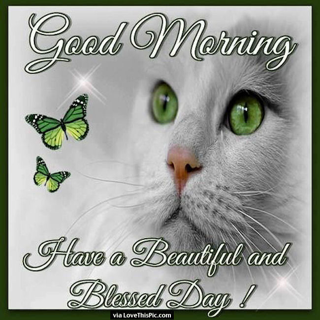 Good Morning Have A Beautiful And Blessed Day Pictures