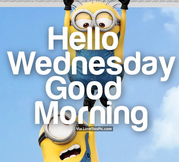 Hump Day Funny Minion Quotes: Hello Wednesday, Good Morning Pictures, Photos, And Images