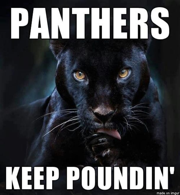 panthers keep pounding pictures photos and images for