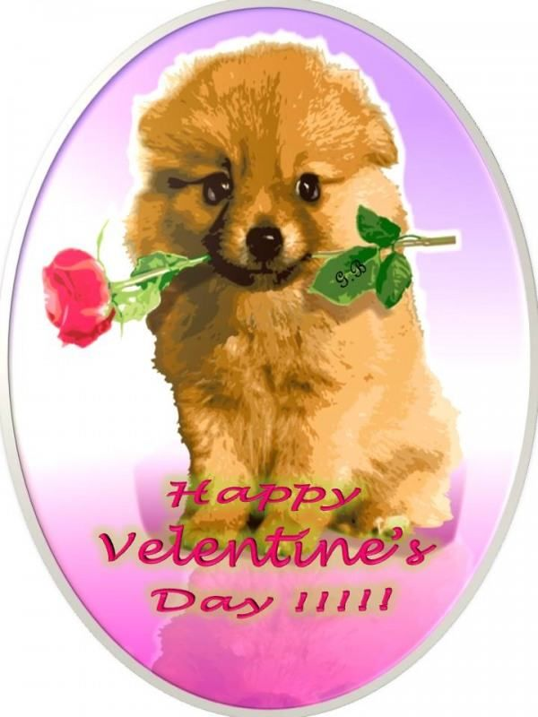 Happy Valentineu0027s Day Puppy