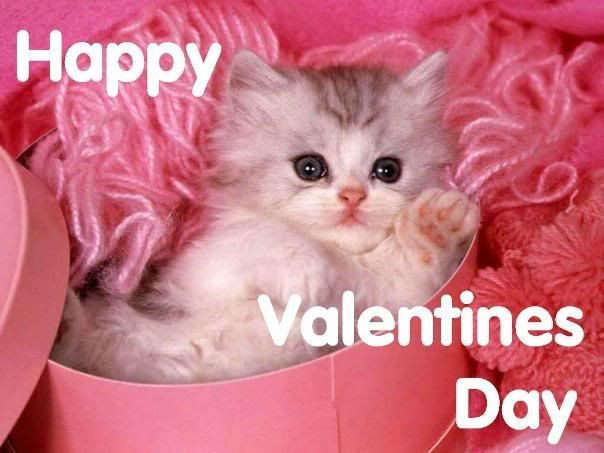 Happy Valentine S Day Kitty Pictures Photos And Images For