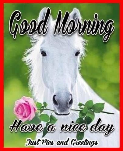 Good Morning Have A Nice Day Quote With A Horse