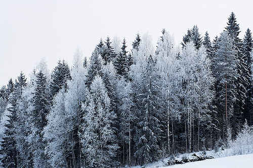Snow Forest Pictures Photos And Images For Facebook