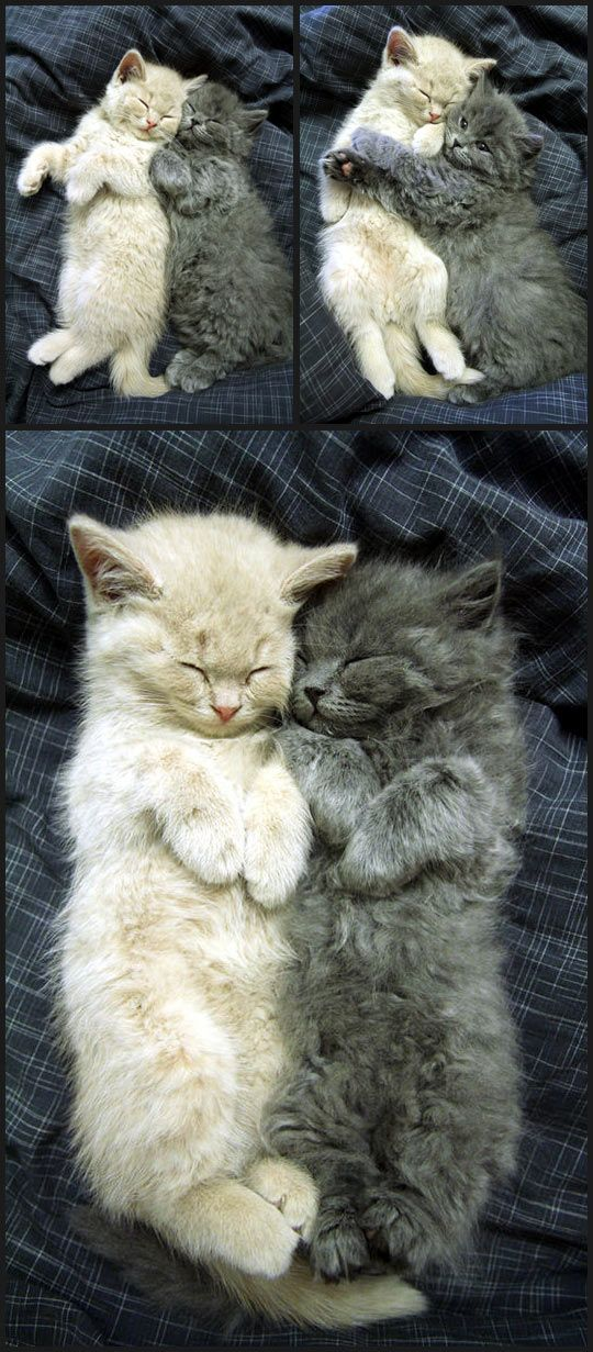 Cuddling Cats Pictures Photos And Images For Facebook