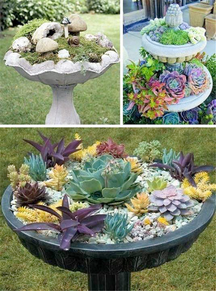 ideas for sedum gardens in bird baths pictures  photos  and images for facebook  tumblr