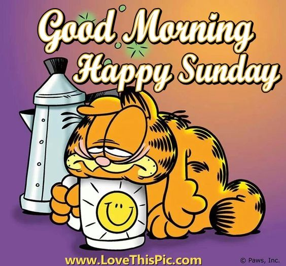 Garfield Good Morning Sunday Quote Pictures Photos And Images For Facebook Tumblr Pinterest And Twitter