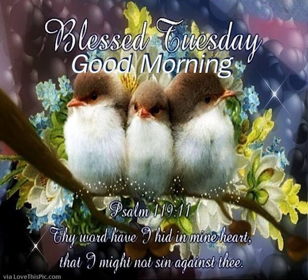 Blessed Tuesday Good Morning Pictures, Photos, and Images ...