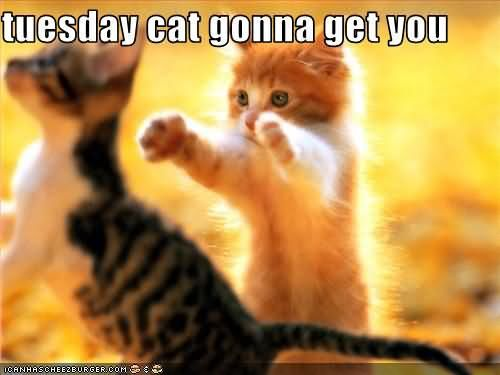 Tuesday Cat Gonna Get You Pictures, Photos, and Images for ...