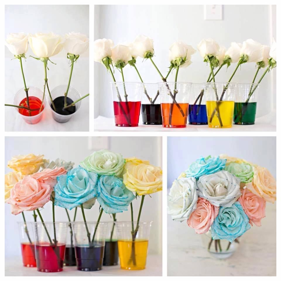 how to dye rainbow roses pictures photos and images for