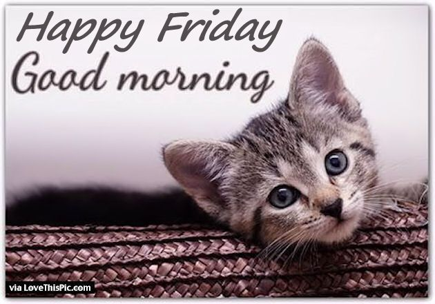 Good Morning Happy Friday Quote With A Cute Kitten ...