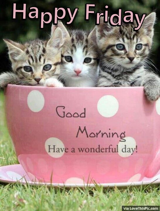 Happy Friday Good Morning Quote With Cats