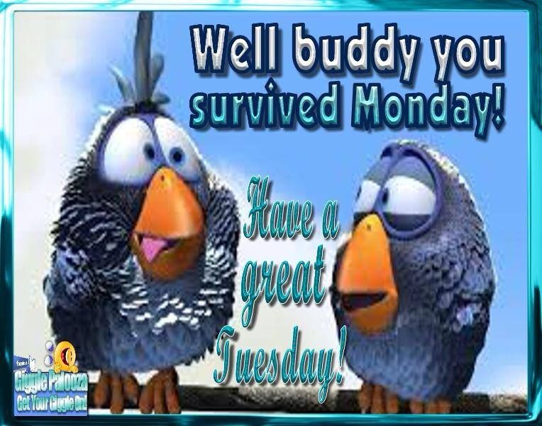 You Survived Monday Have A Great Tuesday Pictures, Photos