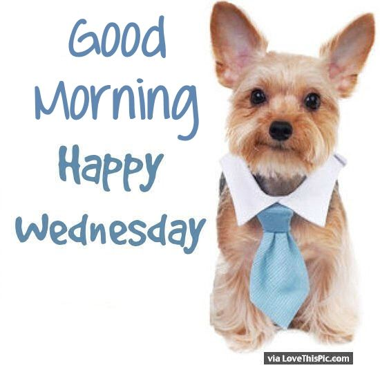 Cute Good Morning Happy Wednesday - 35.3KB