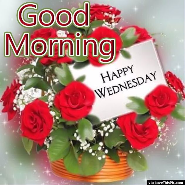 Good Morning Quotes With Roses : Good morning happy wednesday roses pictures photos and