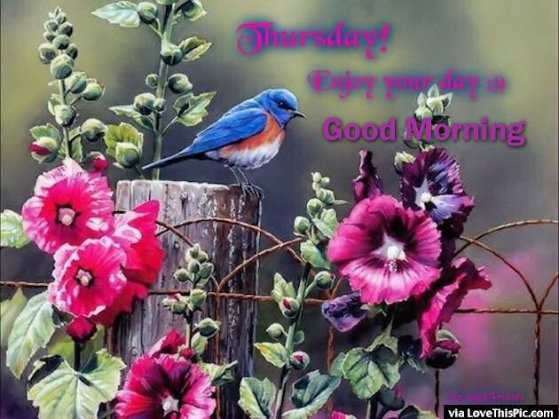 Thursday Enjoy Your Day Good Morning Pictures Photos And