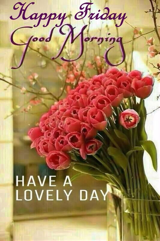 Good Morning Beautiful Happy Friday : Happy friday good morning have a lovely day pictures
