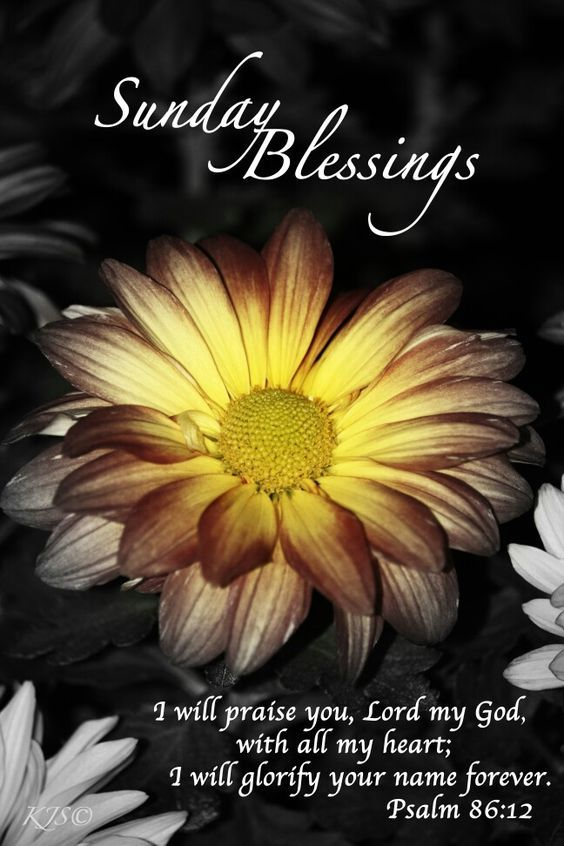 Sunday Blessings Praise The Lord Pictures, Photos, And