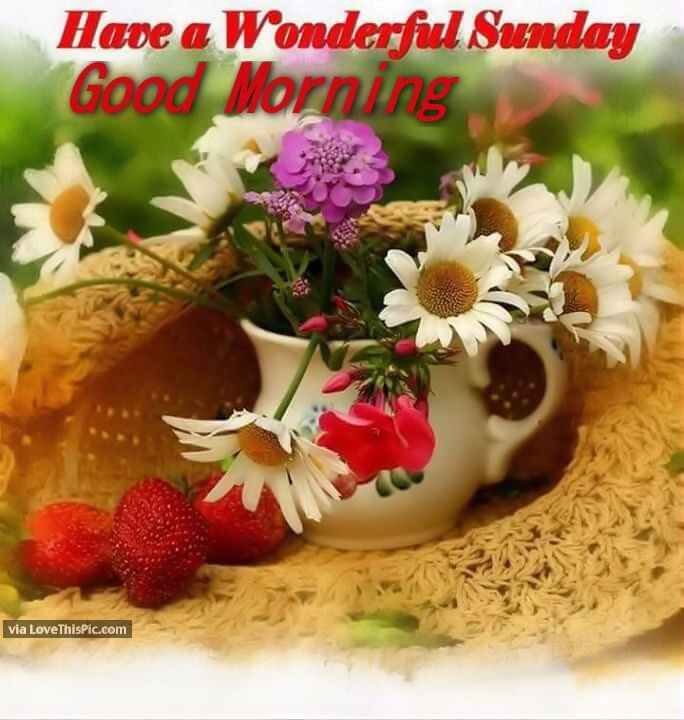 have a wonderful sunday good morning pictures photos and