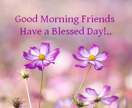 Good morning friends have a blessed day pictures photos and images