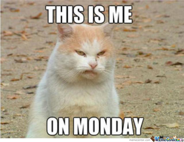 Friday To Sunday Cat Meme