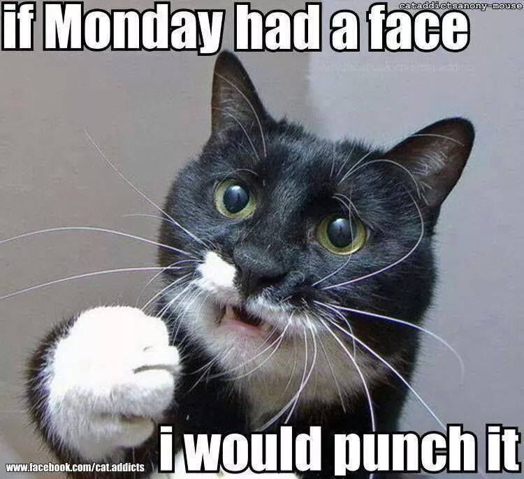 If Monday Had A Face I Would Punch It Pictures Photos