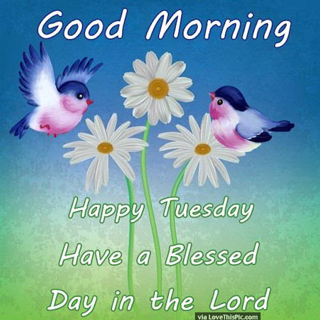 Good Morning Happy Tuesday Have A Blessed Day In The Lord ...