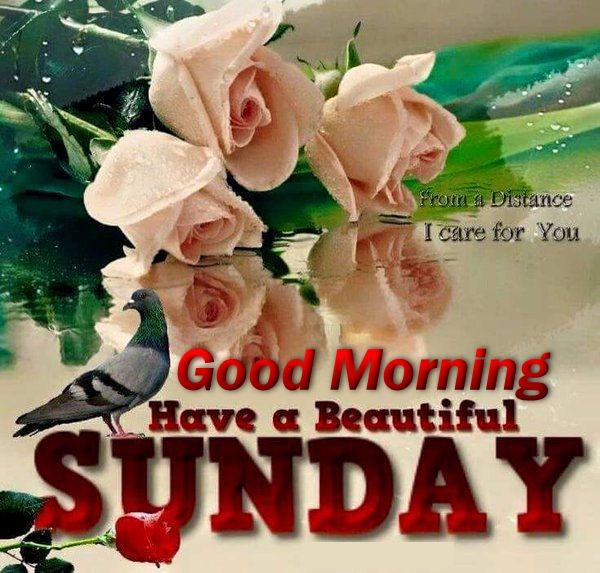 Good Morning Sunday Flowers Images : Good morning have a beautiful sunday quote with flowers